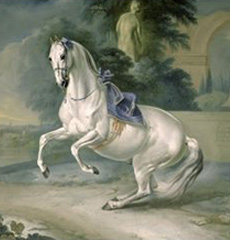 von Hamilton, The white stallion Leal en Levade
