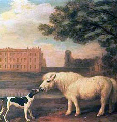 George Stubbs, Hound and Pony